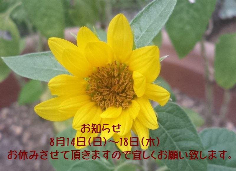 201681312434a6rg5